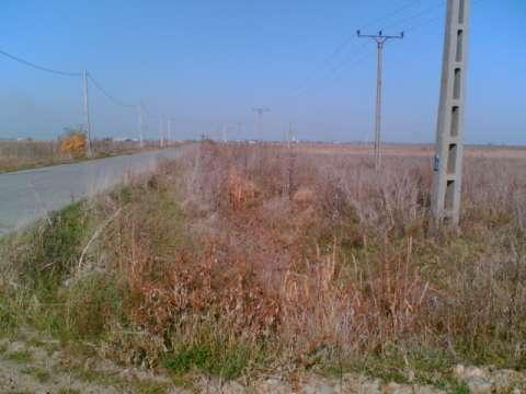 teren pecica - turnu ( zona industriala pecica - arad) 1