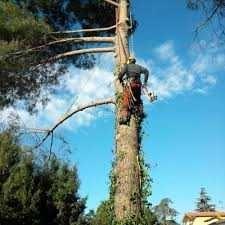 muncitori forestieri in franta 7
