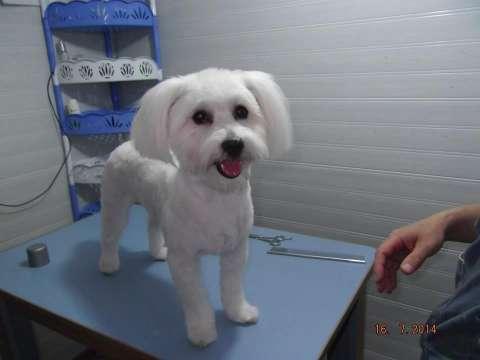 frizerie canina aniela 1