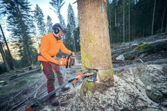 muncitori forestieri in franta 5