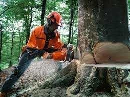 muncitori forestieri in franta 6