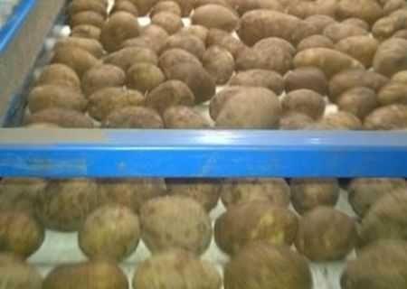 cartofi import la camion 21t 2