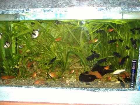 vand acvarii 1