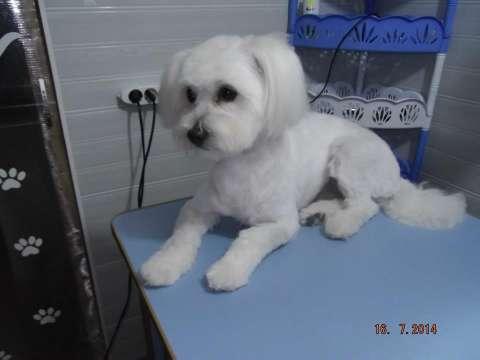 frizerie canina aniela 2