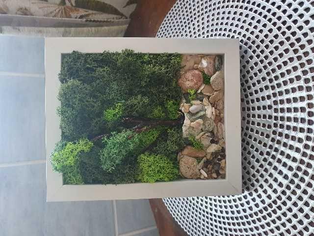 tablou cu licheni 2