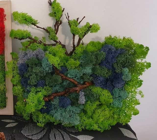 aranjament cu licheni 2